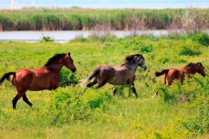 Herdenordnung und ein offener Fluchtweg gehören zu den Grudndbedürfnissen der Pferde. – Foto: Maren Bessler / pixelio.de